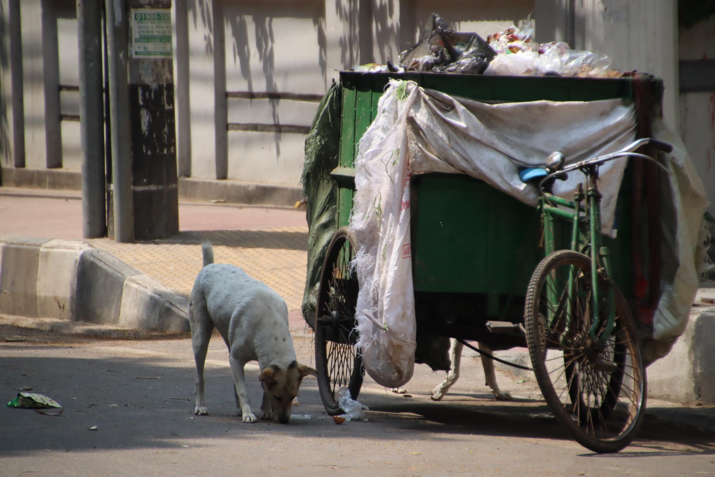 ダッカでよく見かける光景-昼間寝ている野犬が夜に活発化-