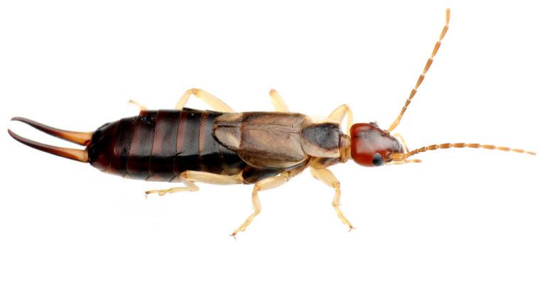 我が家で最近よく見かける虫