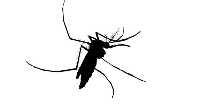 バングラは蚊がじわじわ増え始めたデシュ