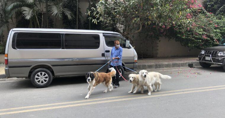 バングラデシュのお金持ちは大型犬が好き?