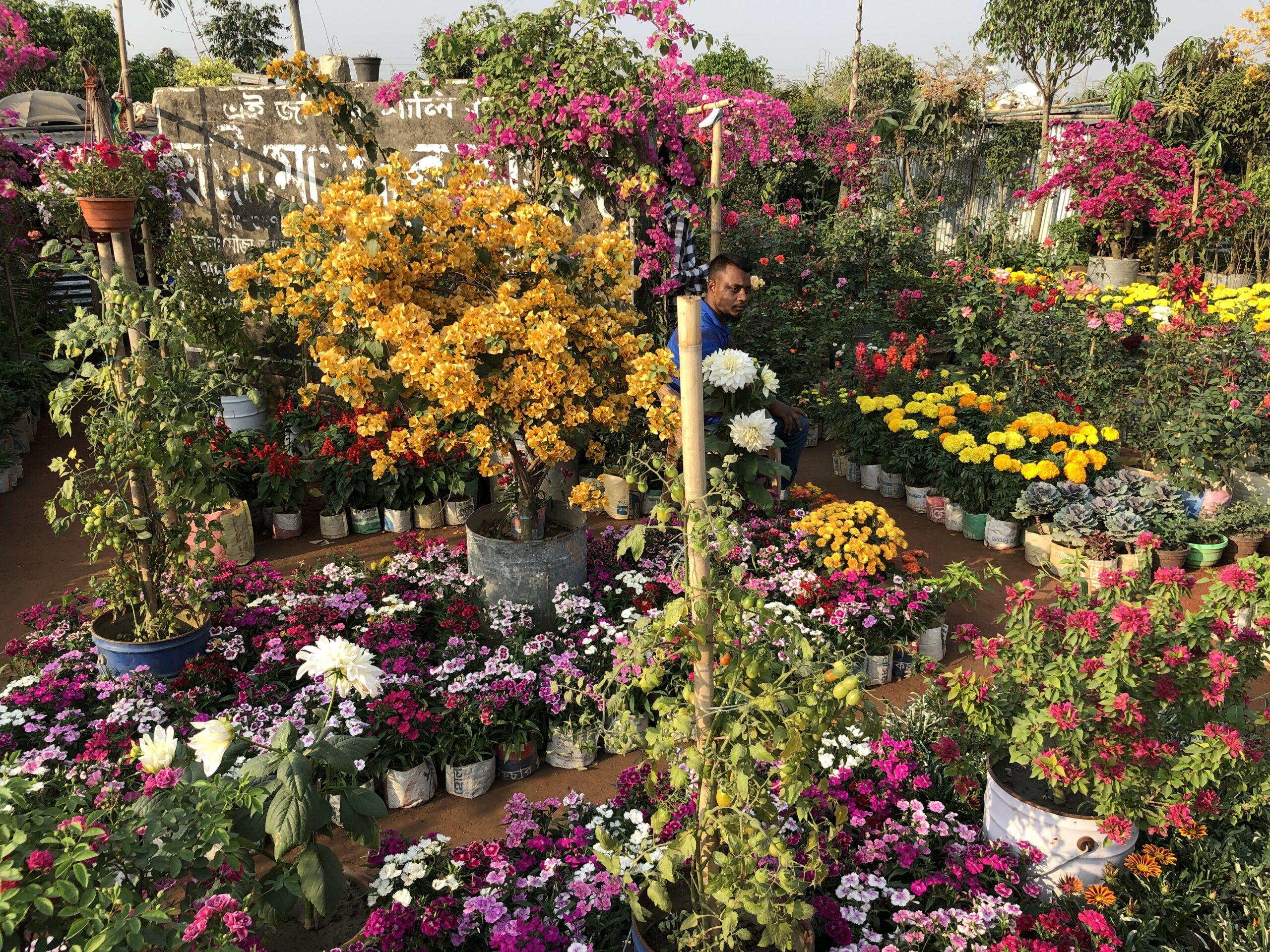 マンゴーの木やブーゲンビリアなど、様々な植物が購入できる