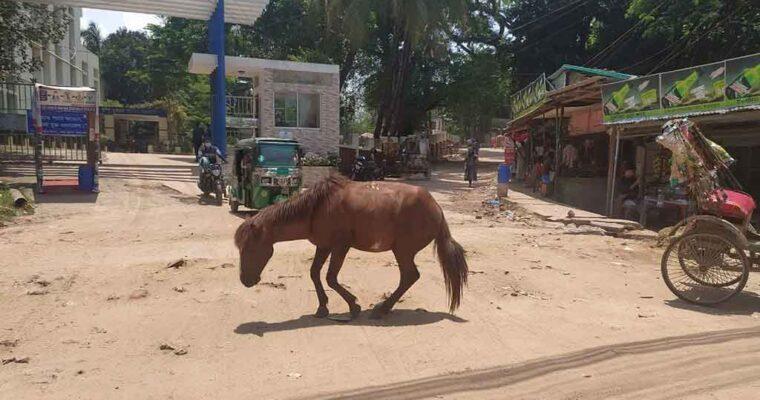 バングラデシュの観光地「コックスバザール」、コロナ禍で馬の餓死が相次ぐ