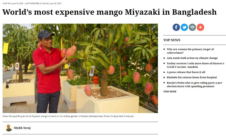 バングラデシュで宮崎マンゴーを生産!?