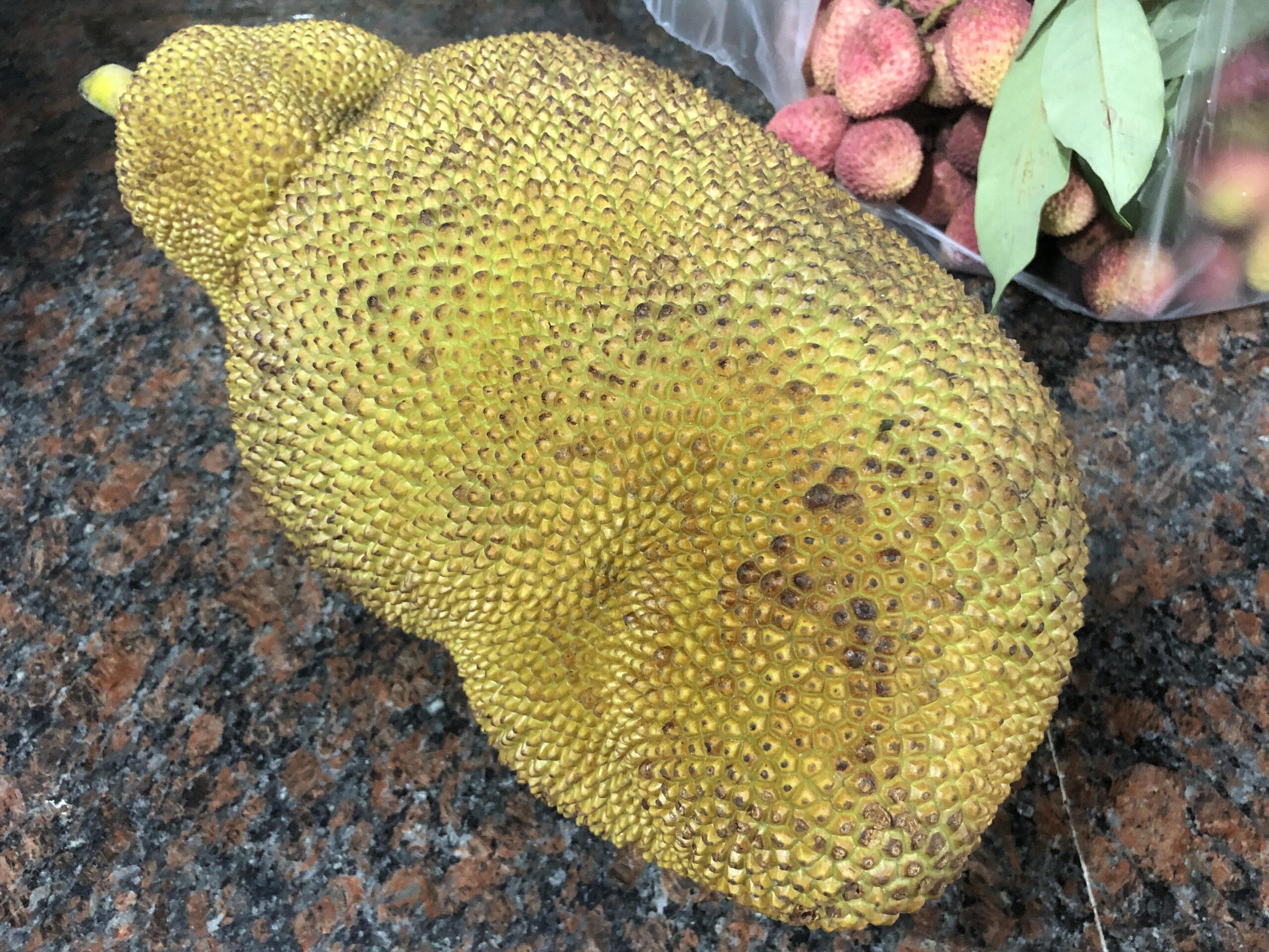 バングラデシュで、世界最大級の果物「ジャックフルーツ」が旬を迎える